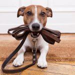 Πώς θα κάνετε το σκύλο σας ευτυχισμένο Tips από το Pet-astero.gr