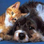 Αρμονική συμβίωση σκύλου και γάτας: πώς θα την πετύχετε