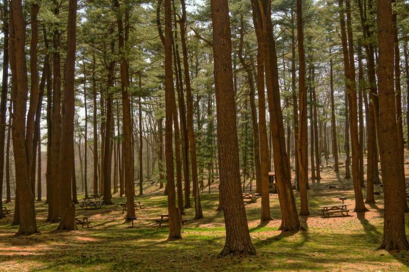 δάσος με ψηλά δέντρα
